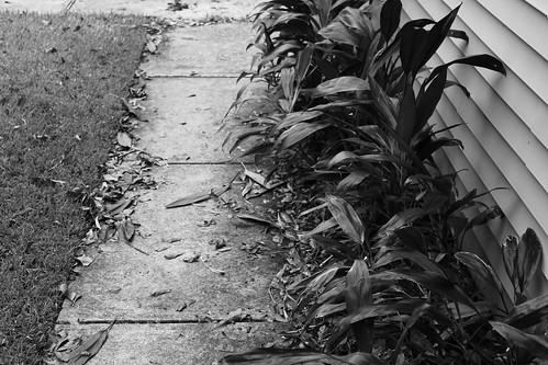 walkway, after battered plants were trimmed