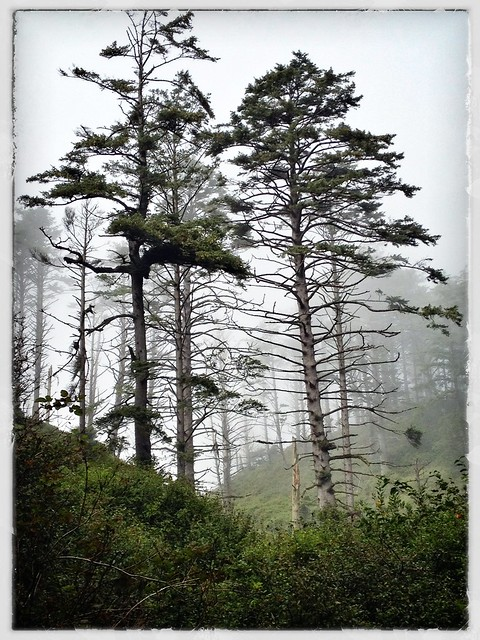 Woods in Fog