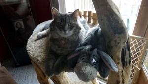 Sophie and Eeyore