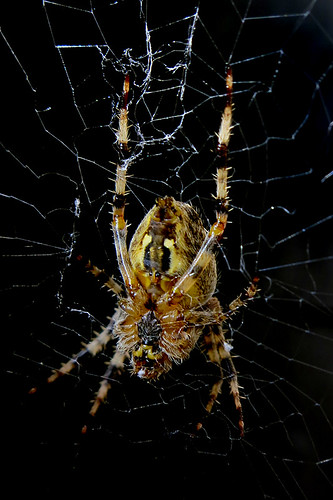 backyard crawler [smartphone wallpaper]