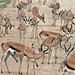 Etosha National Park impressions, Namibia - IMG_3066_CR2_v1