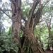 Mount Cameroon climb impressions, day 1 - IMG_2396_v1