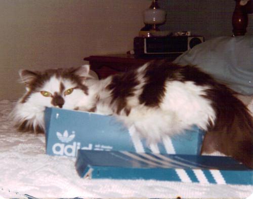 tabby in box