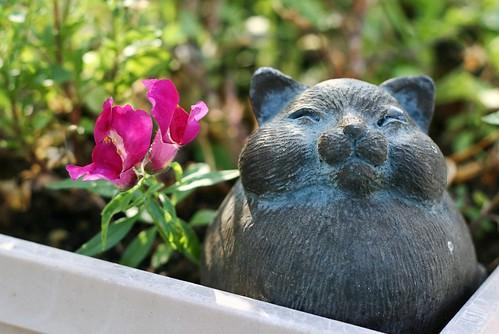 Garden Pet