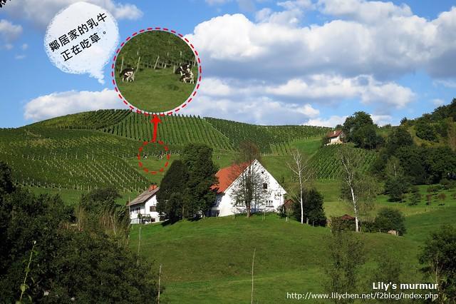這是從尼家望出去看到的鄰居家風景,這是最近的鄰居。後方的山坡上種的是葡萄,還有養乳牛,乳牛正在吃草。