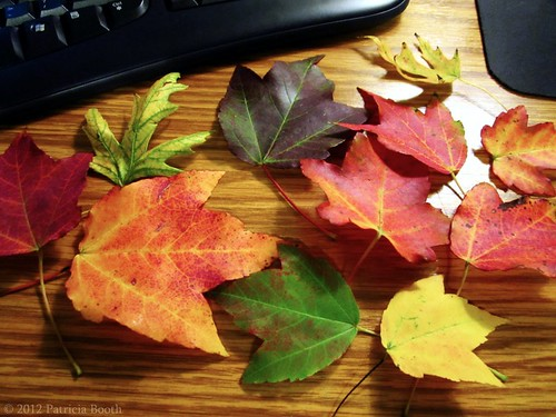 Day 273 Preserving Autumn Leaves by pixygiggles