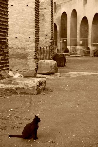 コロッセオで