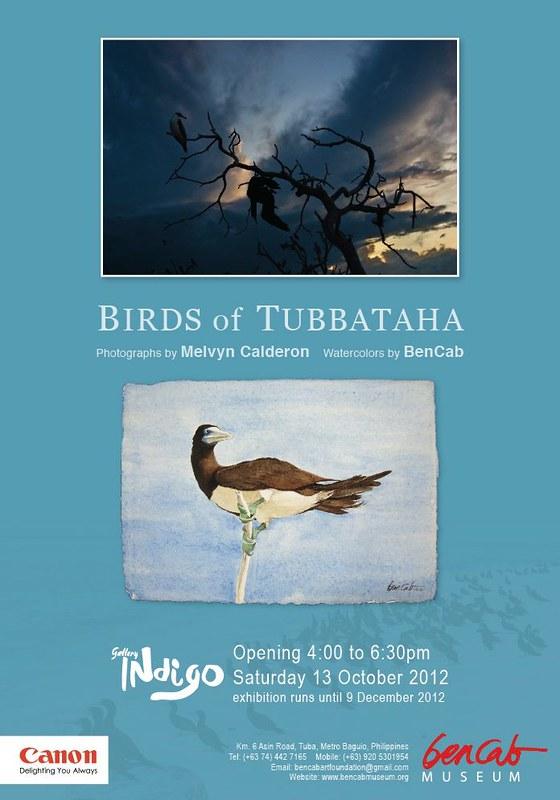 Birds of Tubbataha Poster
