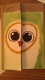 Barn Owl lapbook