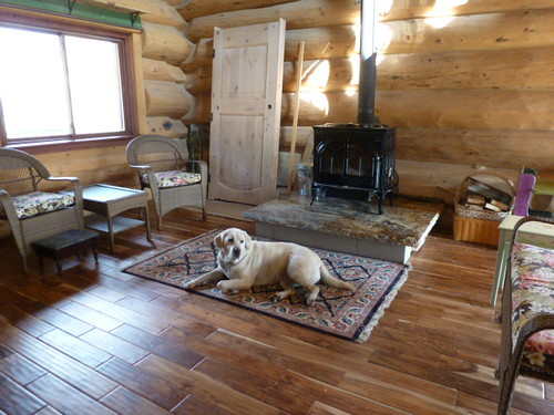 9-27-12 CO - Solley House 12, living room with Chloe