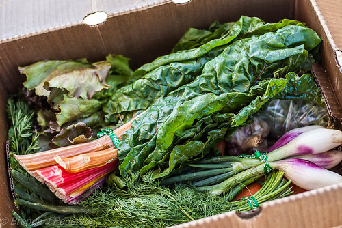 Oxbow Farm Small CSA Box