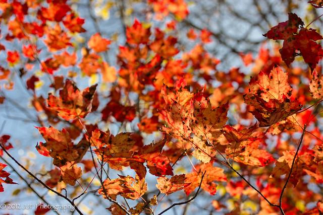 2012_Oct_17_Fall Foliage_022