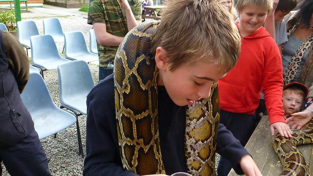 Borth Animalarium, python