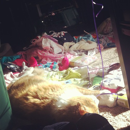 Taco plays with leftover baby-shower balloons, as he lays in the pile of clothes I am trying to sort.