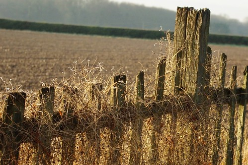 20121201-02_Rustic Fence_Cawston Rugby by gary.hadden