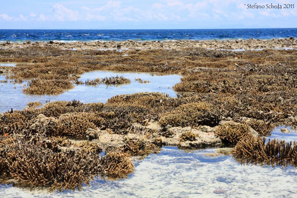 Reef - Pulau Sipadan, Malaysia
