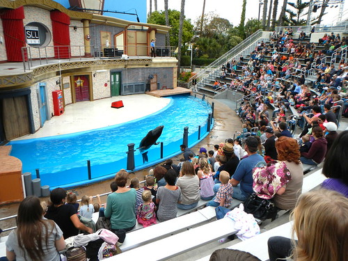 and then a sea lion came out to see all the people in the people zoo