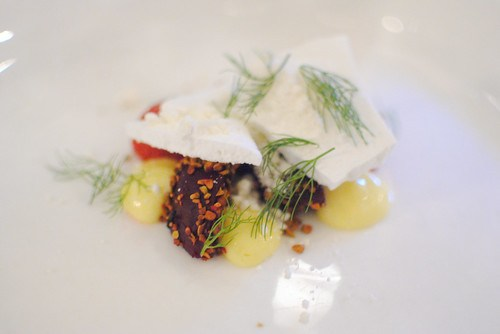 beetroot, meyer lemon, fennel, white chocolate, pistachio (animal)