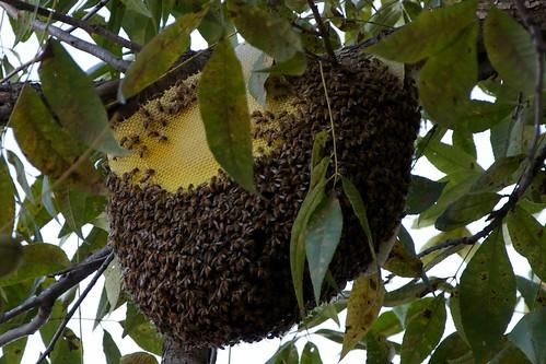 Wild City Hive 3
