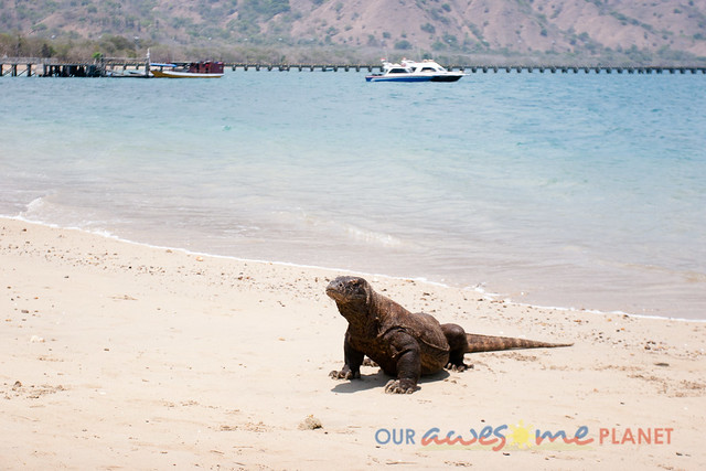 Komodo Dragon National Park-91.jpg