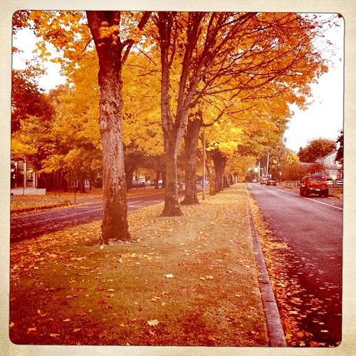 our street by telfandrea