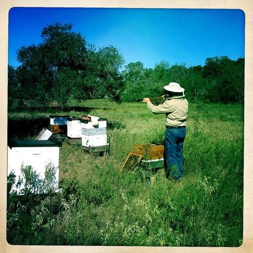 HIpstamatic beekeeper 4