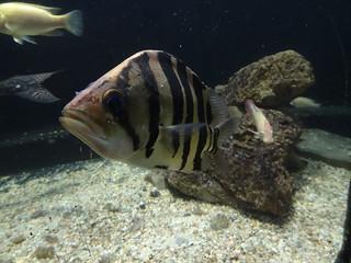 aquarium 030