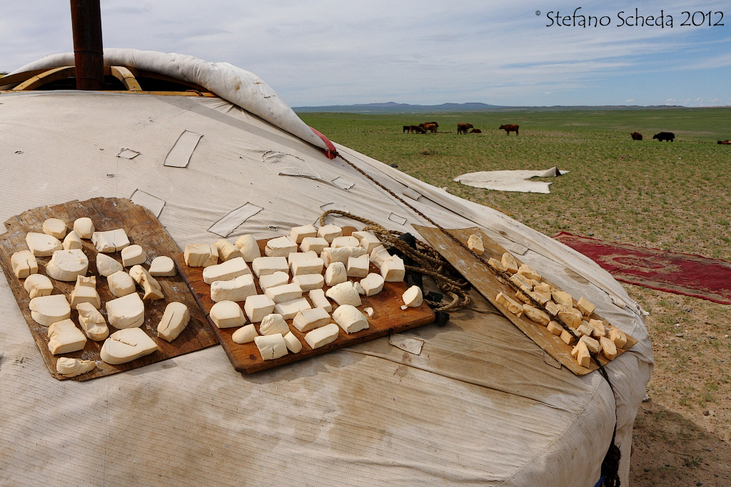 Dry cheese - Mongolia