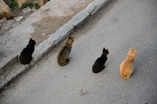 Four cool cats