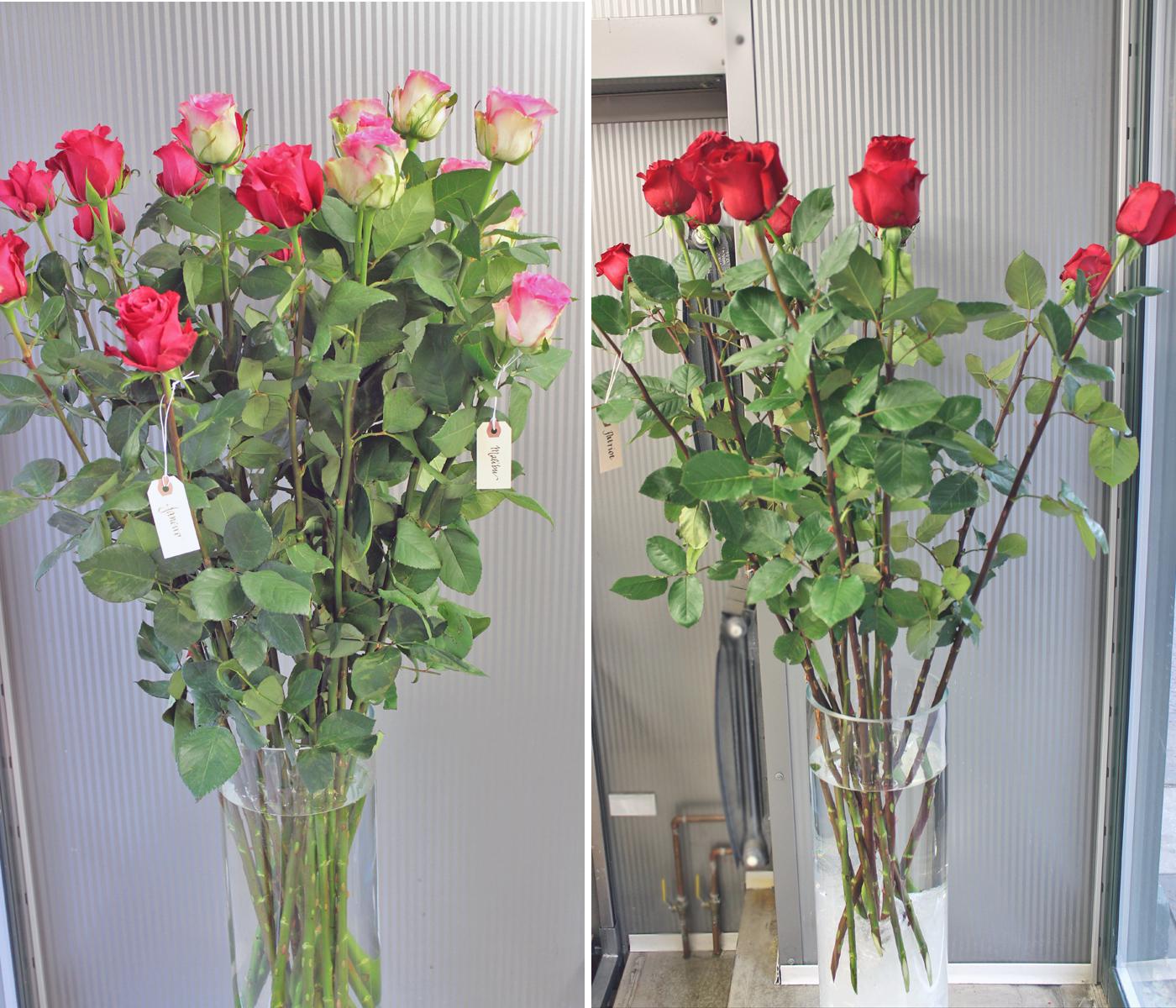 harvest-rose-1