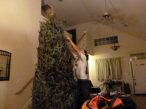 12-9-12 TX - Austin Christmas Tree 4
