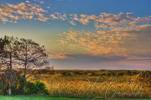 Arthur J Marshall Landscape 3 by Roberto_Aloi