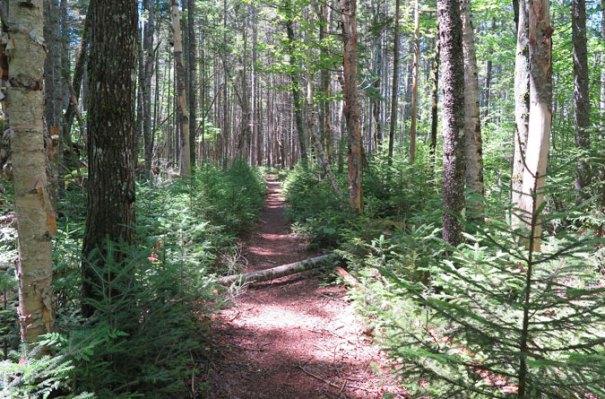 Carrigain Notch Trail Near Nancy Pond Trail