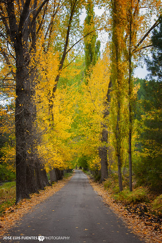 Camino al otoño