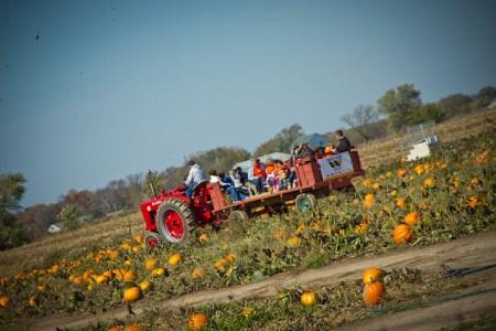 Hay Ride in Pumpkin Patch