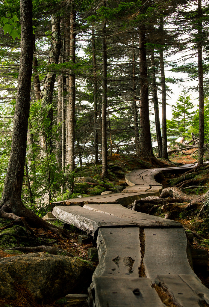 The Winding Trail