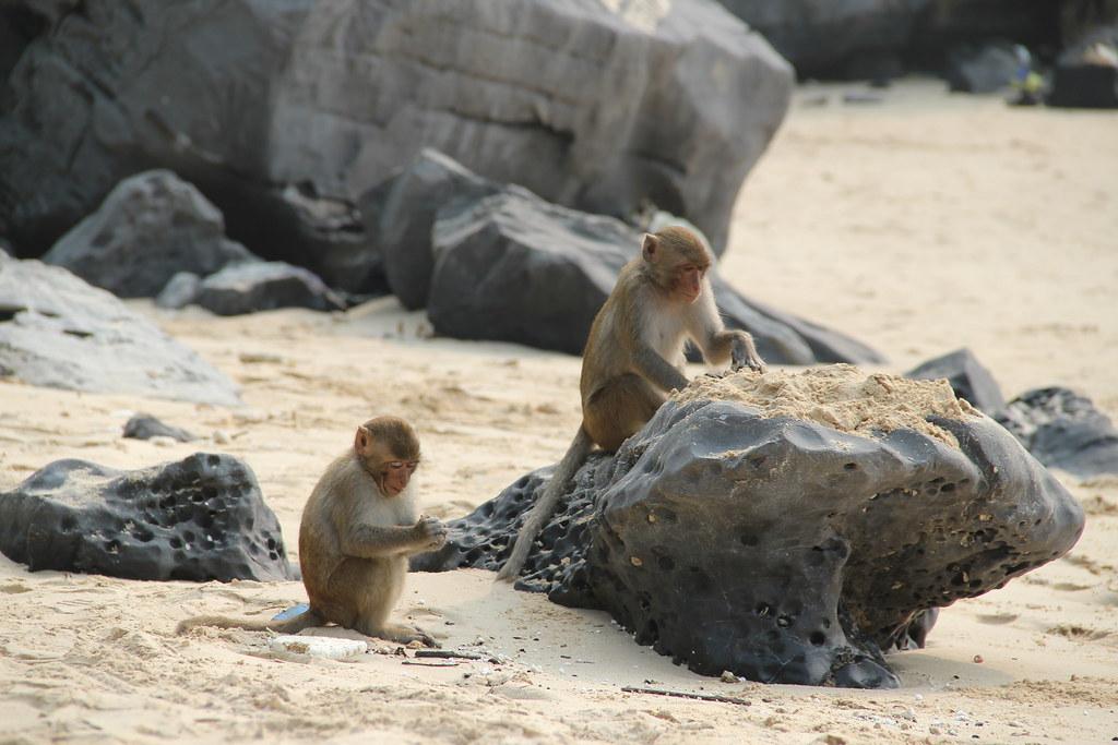 Monkey Island · Halong Bay · Vietnam