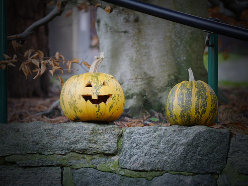 324/366 - Halloween leftover by Flubie