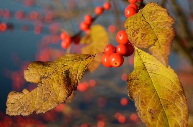 Autumn in Boston 15