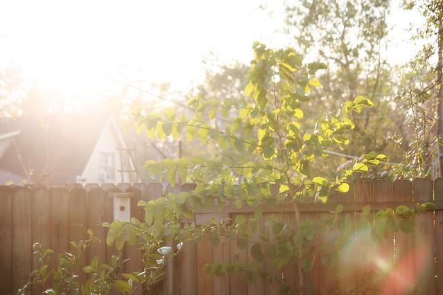 evening light + weekend links
