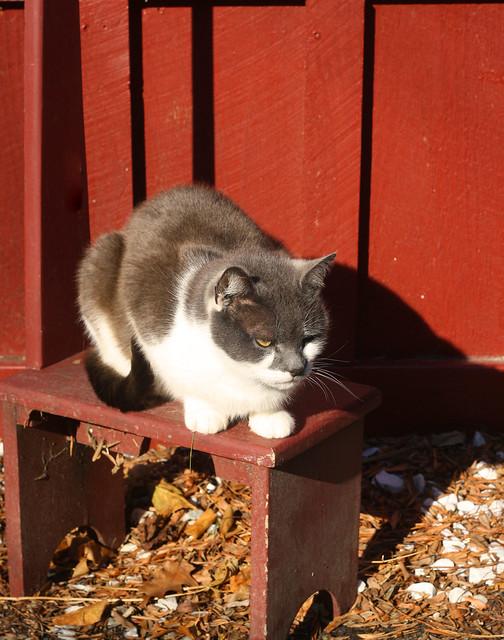 pickitycat