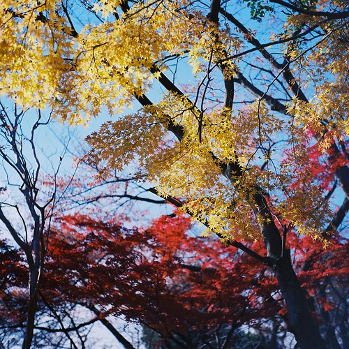 yellow & red leaves