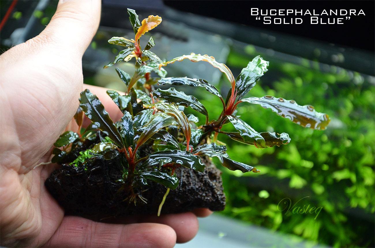 Small Aquarium Plants