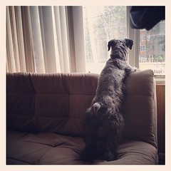 El vigilante.