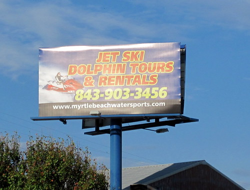 Go out and terrorize the dolphins!