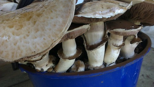mushroom by Br3nda