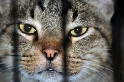 Cat Overpopulation - Django caged