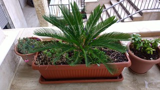 Plant -PureView