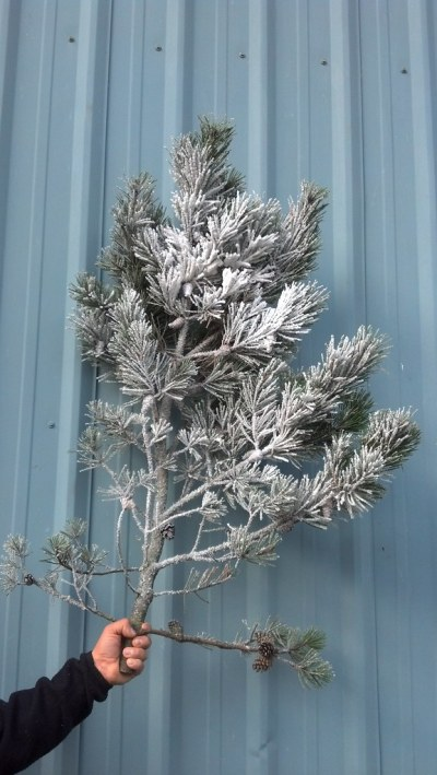 flocked pine branches