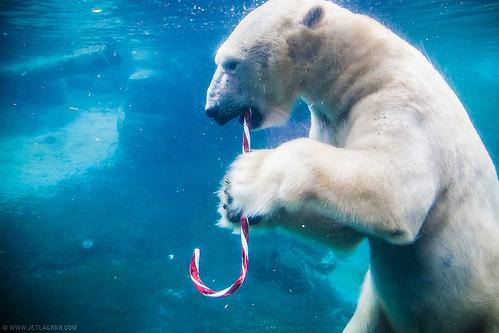 candy cane bear 5